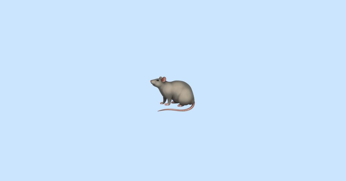 фото крысы смайлик угловой