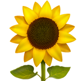Sunflower (Animals & Nature - Plant-Flower)
