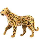 Leopard (Animals & Nature - Animal-Mammal)