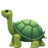 Turtle (Animals & Nature - Animal-Reptile)