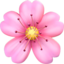 Cherry Blossom Emoji (Apple)